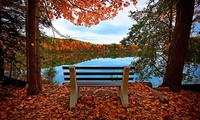 Leaves, reflection, trees, hdr, sky, bench, walk, forest, view, river, autu ...