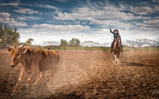 farm, rodeo, ropping cattle, horse, Cowgirl